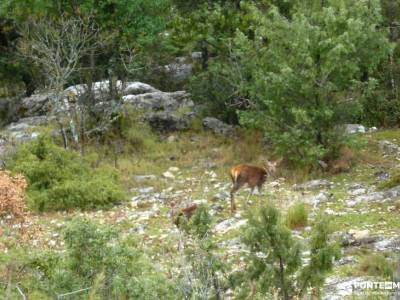 Parque Natural Cazorla-Sistema Prebético;vall de laguar senderismo rutas por cabañeros tiendas sen